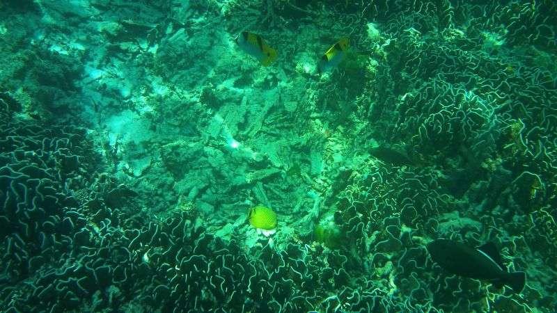 Similan Island 16